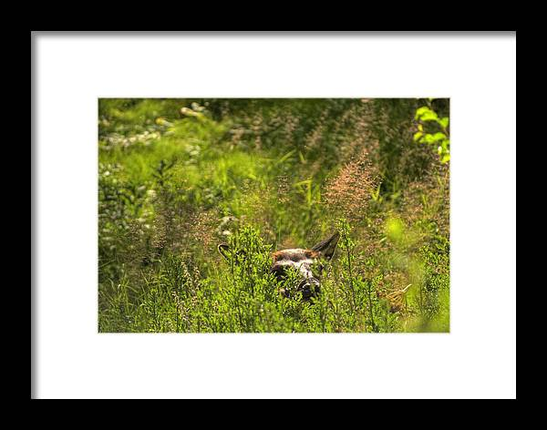 Yellowstone Framed Print featuring the photograph Yellowstone Elk by Patrick Flynn
