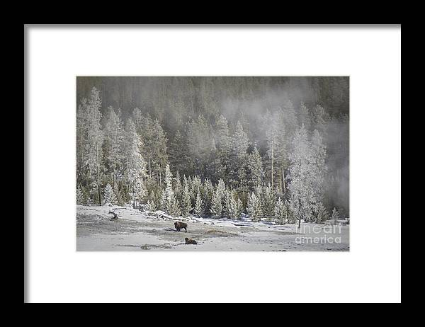 Yellowstone Framed Print featuring the photograph Yellowstone Winter Landscape by Carolyn Fox