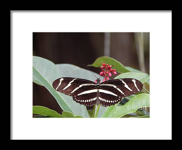 Butterfly Framed Print featuring the photograph Yikes Stripes by Lisa Cassinari