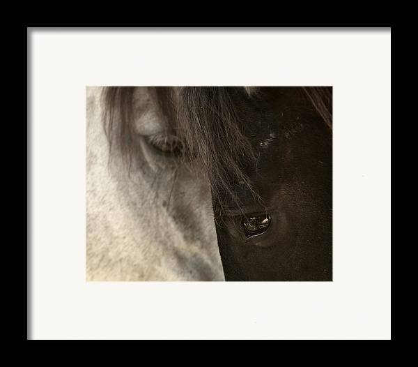 Horse Framed Print featuring the photograph Ying And Yang by Ron McGinnis