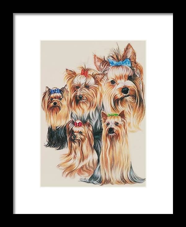 Purebred Framed Print featuring the drawing Yorkshire Terrier by Barbara Keith