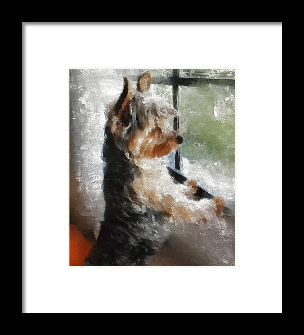 Yorkshire Terrier Framed Print featuring the painting Yorkshire Terrier Its Warm In Here But So Much More Interesting Out There by JG Keevil