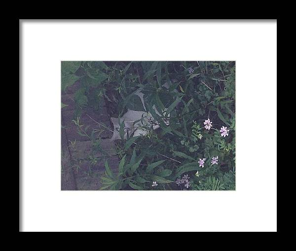 Framed Print featuring the photograph You Can't See Me by Avery McCullough