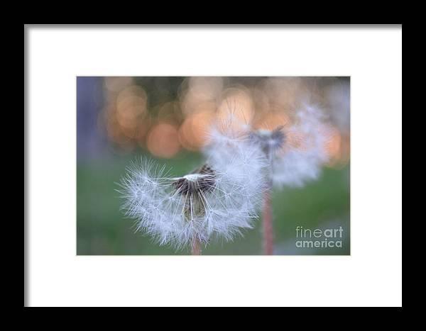 Eva Maria Nova Framed Print featuring the photograph You Melt My Soul by Eva Maria Nova
