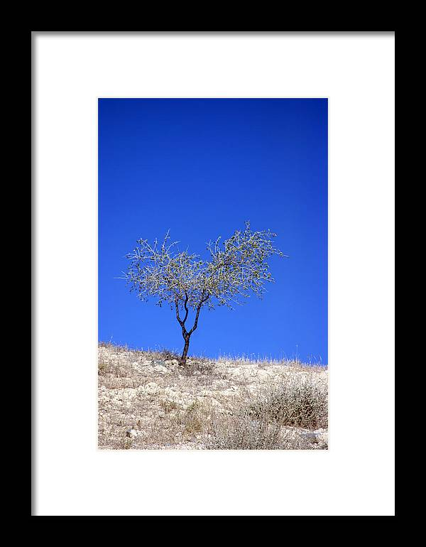 Photographer Framed Print featuring the photograph young Olive 2 by Jez C Self