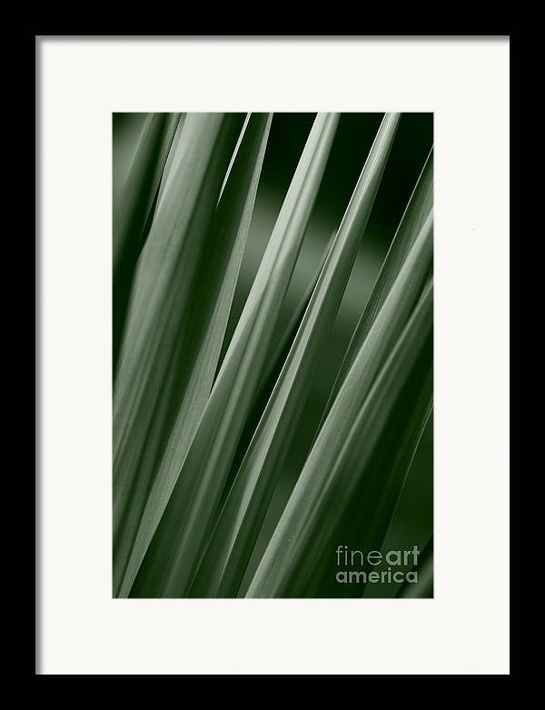 Abstract Framed Print featuring the photograph Yucca Spikes by Jeannie Burleson