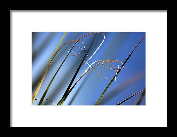 Yucca Framed Print featuring the photograph Yucca Strands by Robin Street-Morris