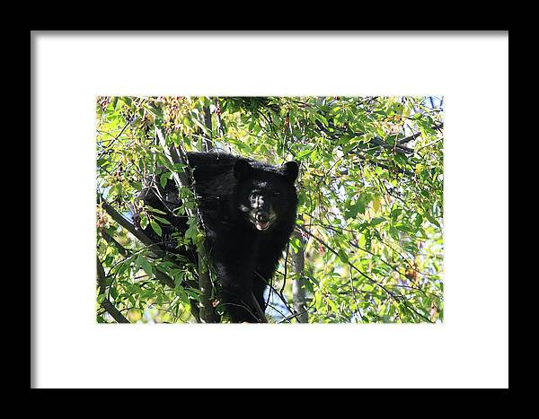 Bears Framed Print featuring the photograph Yum Yummmm by Taylor Howe