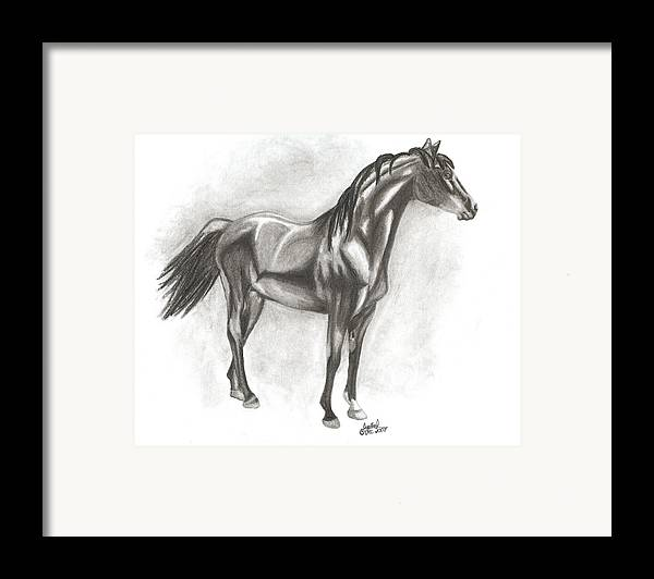 Zimmy Portrait Horse Framed Print featuring the drawing Zimmy by Crystal Suppes