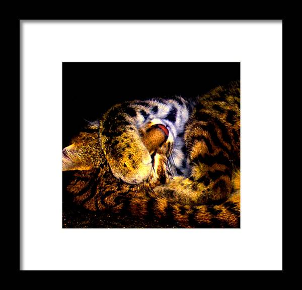 Cat Framed Print featuring the photograph Zoo Baby by Misty VanPool