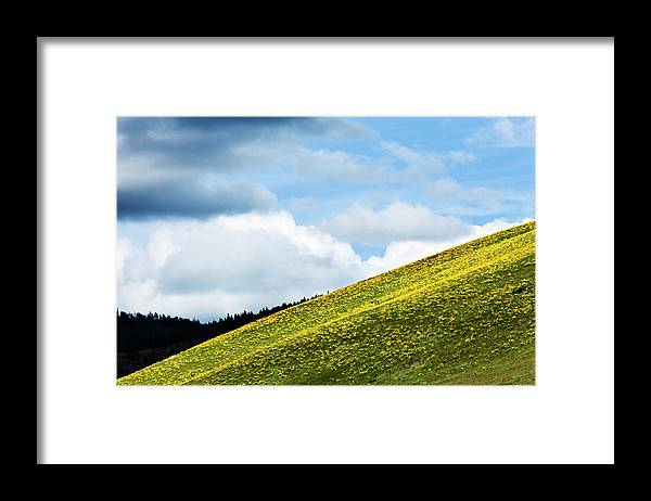 A Hillside Of Wild Flowers Blooming Framed Print By Patrick Orton