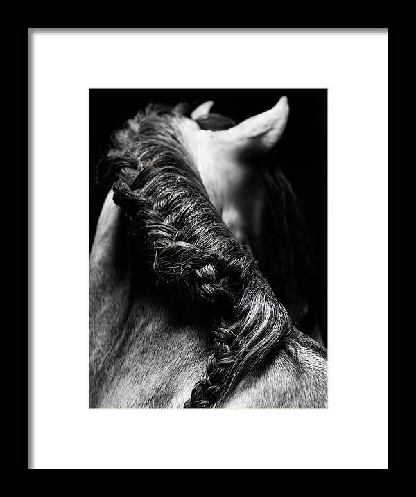 Horse Framed Print featuring the photograph Braided Mane Of Grey Horse by Henrik Sorensen