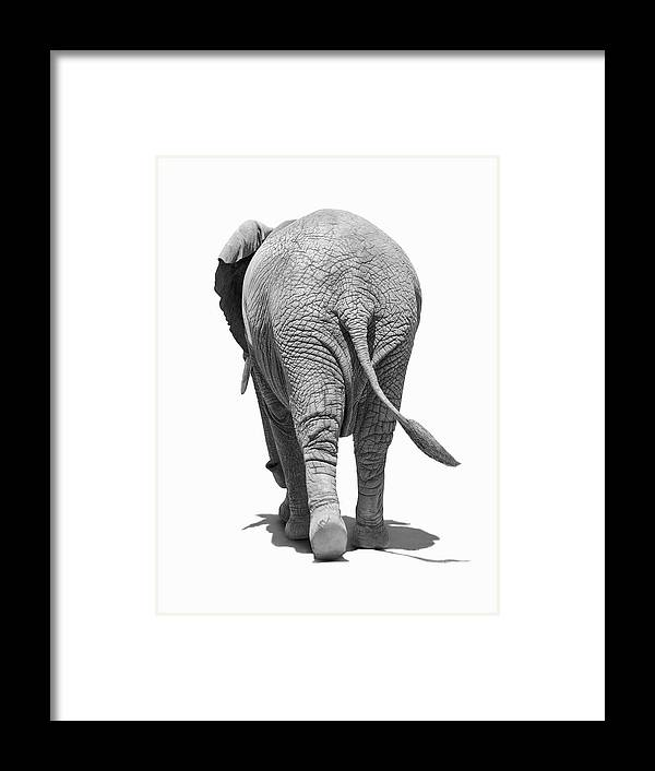 Shadow Framed Print featuring the photograph Elephants Behind by Burazin