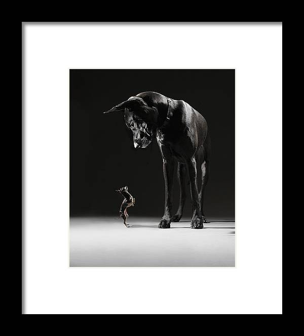 Large Framed Print featuring the photograph Great Dane And Chihuahua Staring At One by Lauren Burke