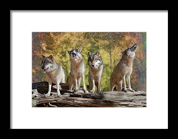 Wolf Framed Print featuring the photograph Howling Wolves by Jeannee Gannuch