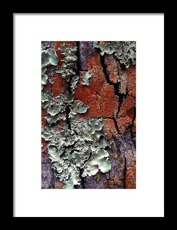 Built Structure Framed Print featuring the photograph Lichen On Tree Bark by John Foxx