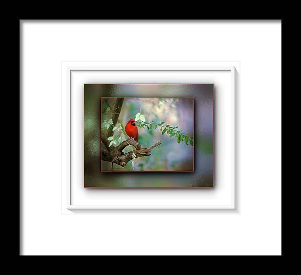 Northern Cardinal Framed Print featuring the photograph Northern Cardinal by Robert L Jackson
