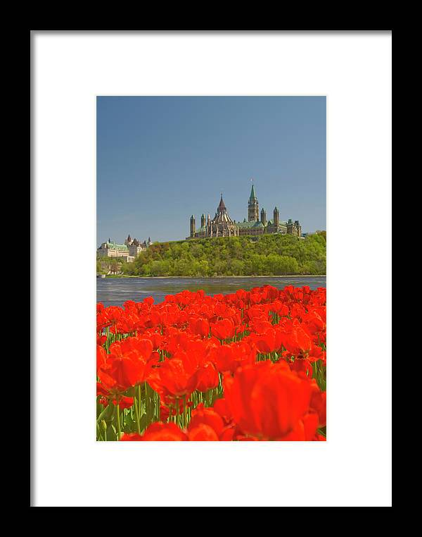 Clear Sky Framed Print featuring the photograph Ottawa Tulip Festival 1 by Dennis Mccoleman