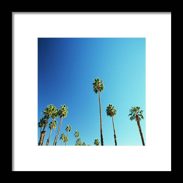 Clear Sky Framed Print featuring the photograph Palm Trees Against Blue Sky 1 by Micha Pawlitzki