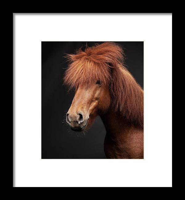 Horse Framed Print featuring the photograph Portrait Of Horse by Arctic-images