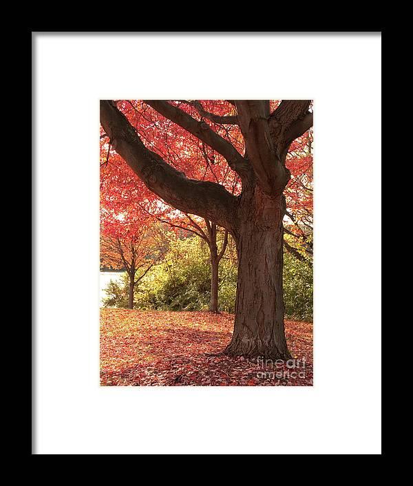 Autumn Framed Print featuring the photograph Shading Autumn by Ann Horn