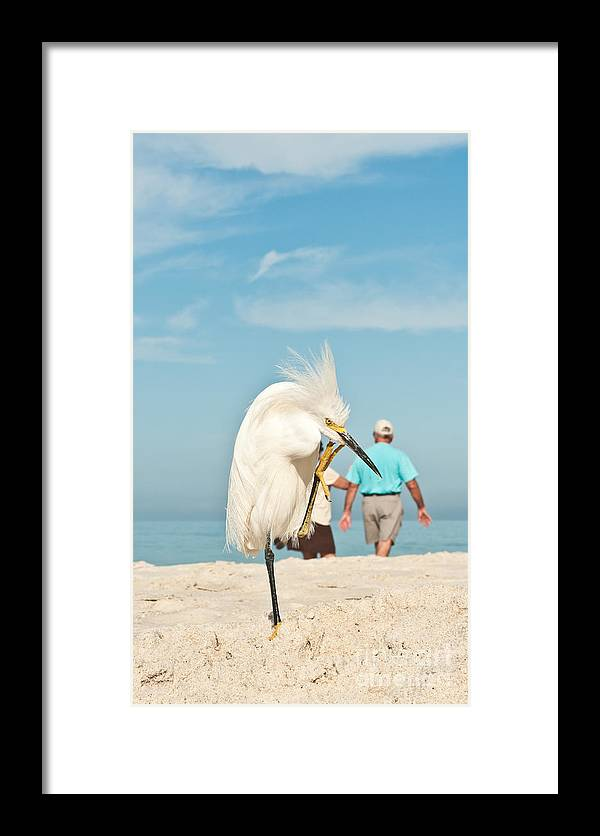 Egret Framed Print featuring the photograph Snowy Egret Standing On Sandy Beach On by Robert F. Leahy