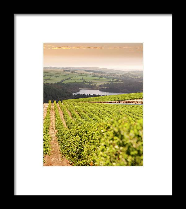 Scenics Framed Print featuring the photograph Vineyard At Sunset by Lockiecurrie