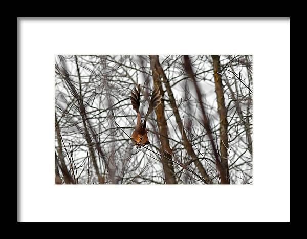 American Woodcock Framed Print featuring the photograph Wings by Asbed Iskedjian