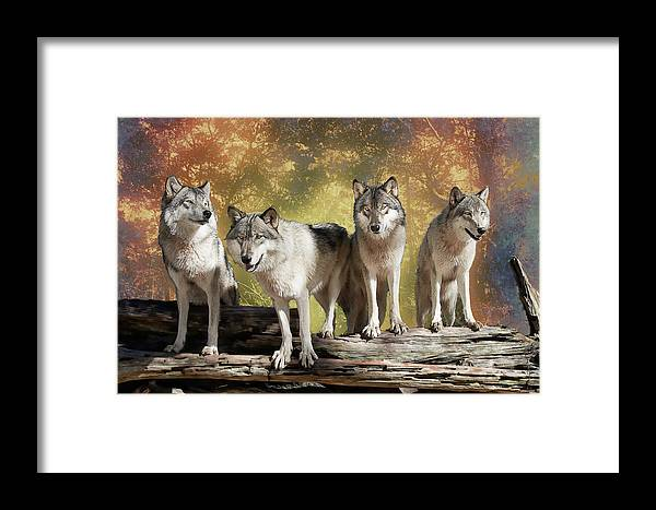 Wolf Framed Print featuring the photograph Wolf Pack by Jeannee Gannuch