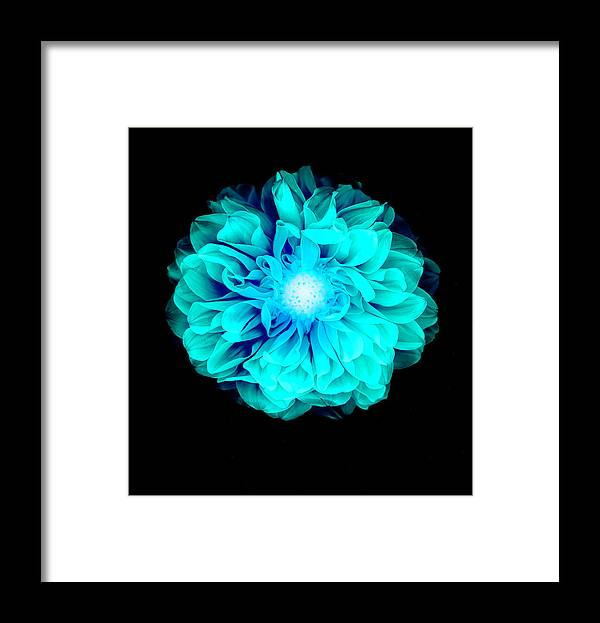 Black Color Framed Print featuring the photograph X-ray Like Image Of A Flower by Chris Parsons