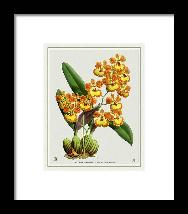 Vintage Framed Print featuring the drawing Orchid Vintage Print On Tinted Paperboard by Baptiste Posters