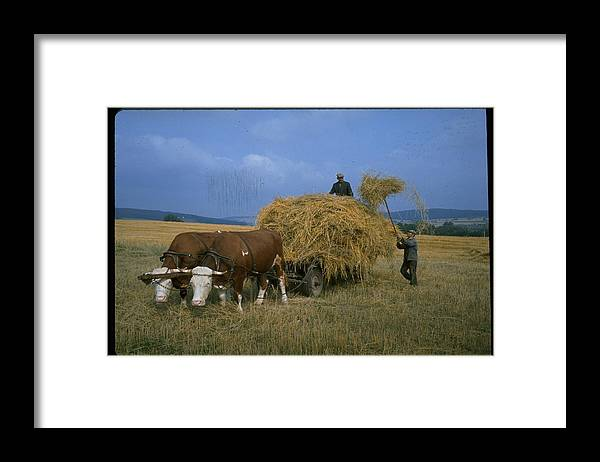 Working Framed Print featuring the photograph Czechoslovakian Peasants Working In The by Bill Ray