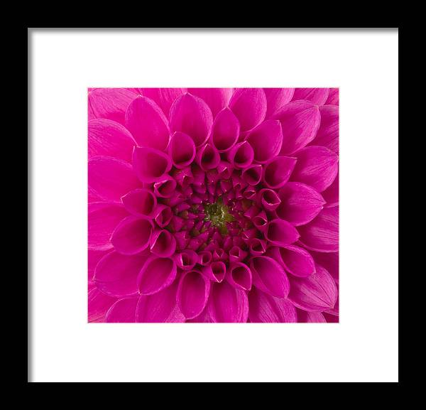 Saturated Color Framed Print featuring the photograph Dahlia by Vidok