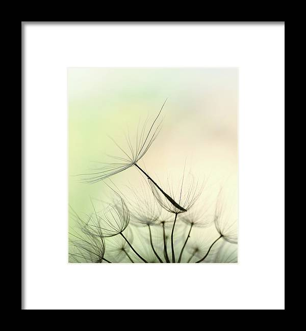 Single Flower Framed Print featuring the photograph Dandelion Seed by Jasmina007