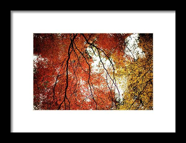 Tranquility Framed Print featuring the photograph Fall Colors In Japan by Jdphotography