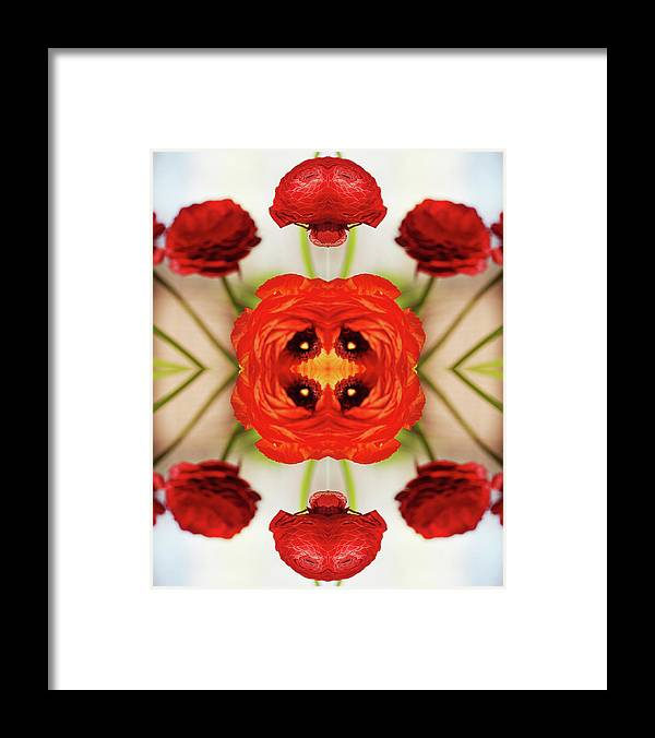 Tranquility Framed Print featuring the photograph Ranunculus Flower by Silvia Otte