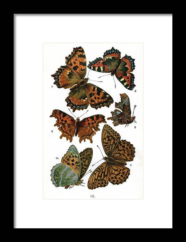 White Background Framed Print featuring the digital art Butterflies by Duncan1890