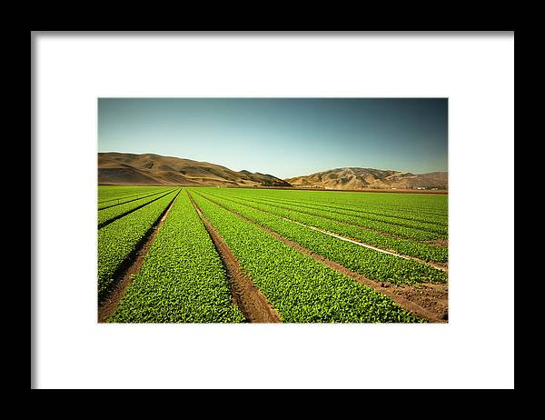Environmental Conservation Framed Print featuring the photograph Crops Grow On Fertile Farm Land by Pgiam