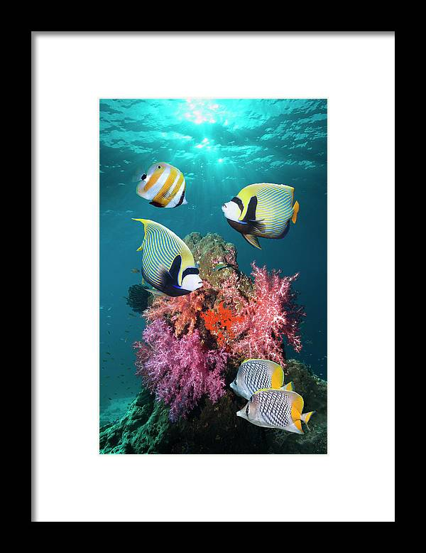 Tranquility Framed Print featuring the photograph Tropical Coral Reef Fish by Georgette Douwma