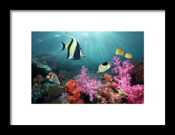 Tranquility Framed Print featuring the photograph Coral Reef Scenery by Georgette Douwma
