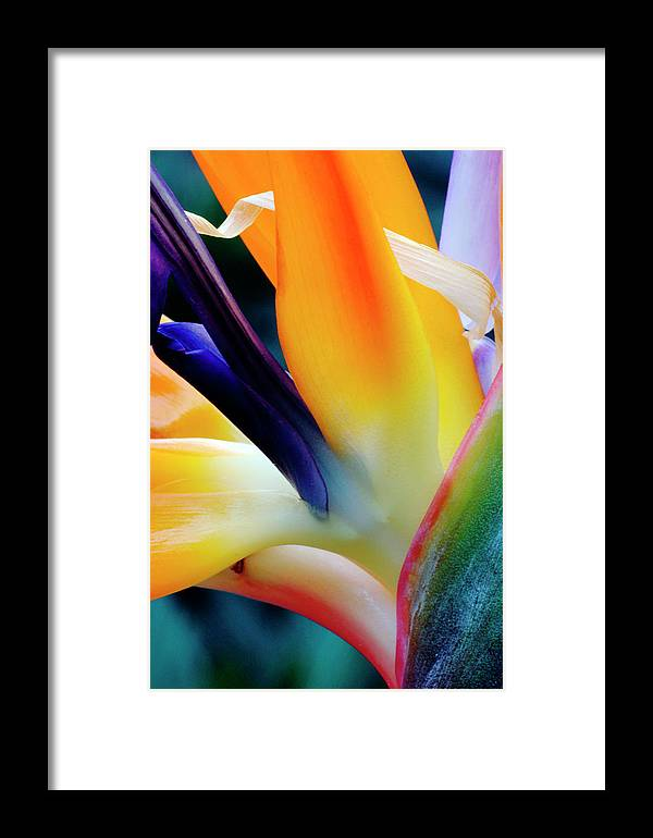 Banana Tree Framed Print featuring the photograph A Close-up Of A Flower Of A Bird Of by Eromaze