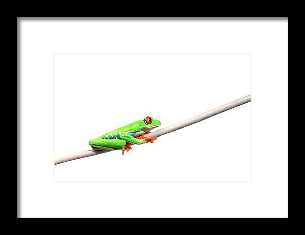 Rope Framed Print featuring the photograph A Frog Hanging On by Design Pics/corey Hochachka