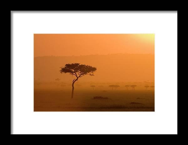 Tranquility Framed Print featuring the photograph Acacia Tree At Sunset, Masai Mara by James Hager / Robertharding