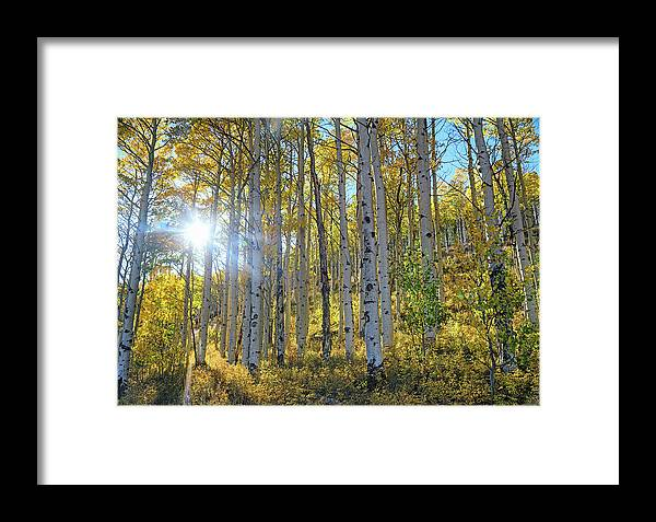 Aspens Framed Print featuring the photograph Afternoon Aspens by Brian Kerls