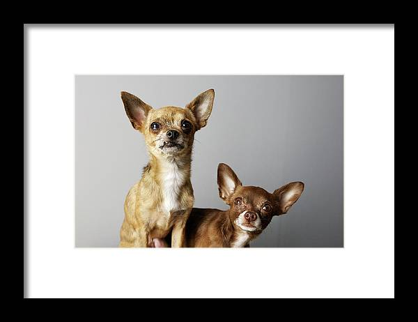 Animal Themes Framed Print featuring the photograph All Dog, No Cat by Laura Layera