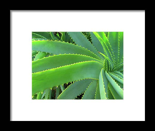 Natural Pattern Framed Print featuring the photograph Aloe Vera - Healing Plant by Lubilub