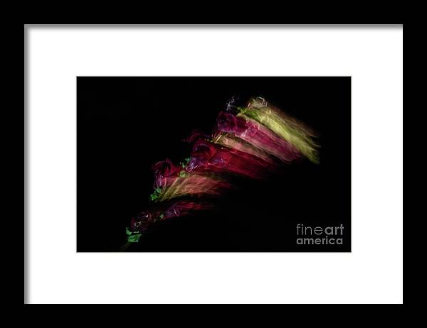 Snapdragon Framed Print featuring the photograph Amazing Flower Of Snapdragons by Valerie Kovt