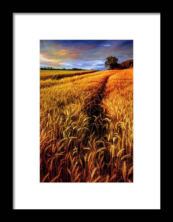 American Framed Print featuring the photograph Amber Waves Of Grain Painting by Debra and Dave Vanderlaan