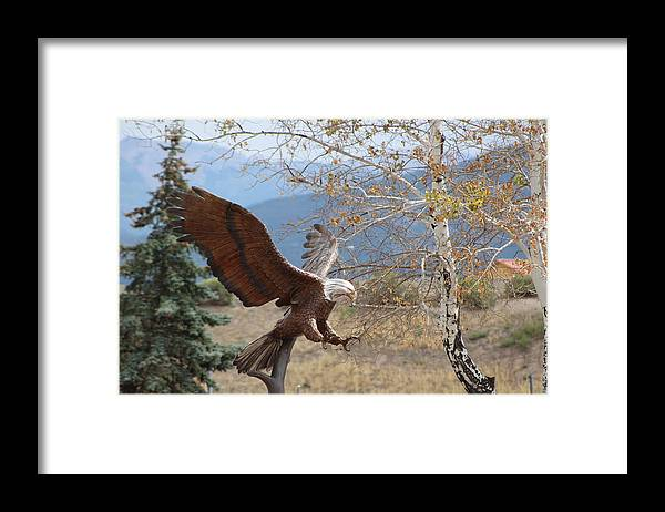 Eagle Framed Print featuring the photograph American Eagle in Autumn by Colleen Cornelius