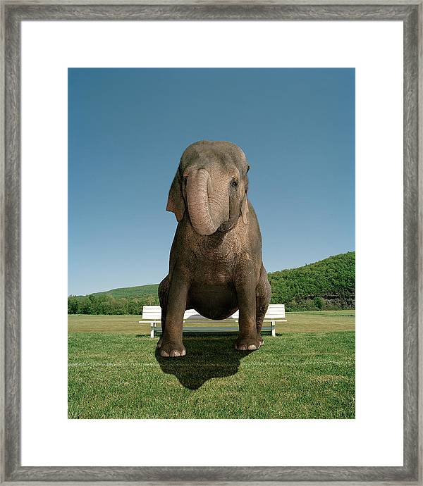 An Elephant Sitting On A Park Bench Framed Print By Matthias Clamer